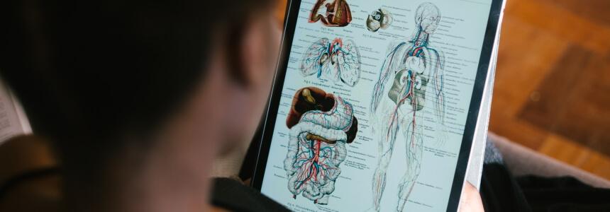 Junge Frau, die den menschlichen Körper studiert. Das Medizinstudium hat einen NC.